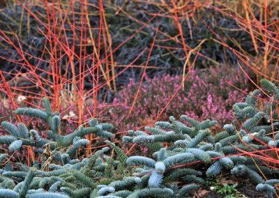Bressingham Gardens (Angleterre)