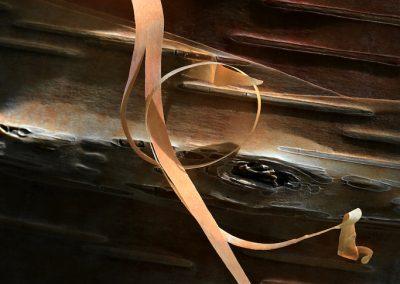 Betula Hergest - (Bouleau d'Hergest - Angleterre)