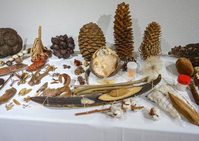 Expositions Fruit & Graines - Photo 02