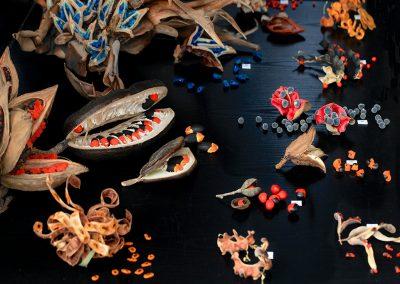 Expositions Fruit & Graines - Photo 08