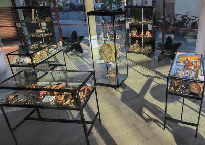 Expositions Fruit & Graines - Photo 01