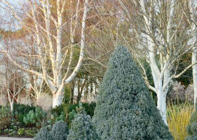 Sir Harold Hillier Gardens (Angleterre)